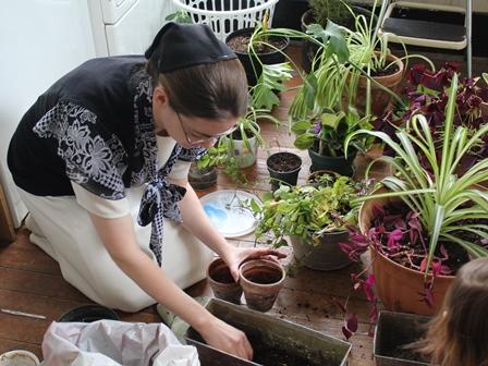 Shari planting