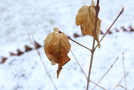 leaves-1363