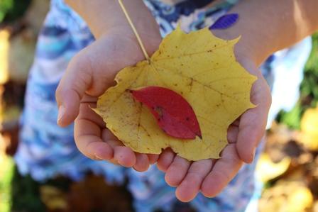 leaves_4372