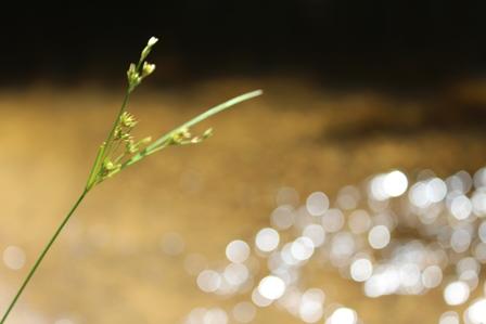 grass_2217
