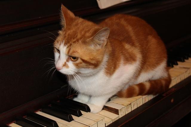 cat_7462
